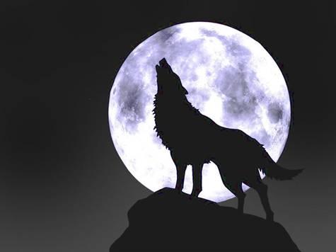 wolf-principles
